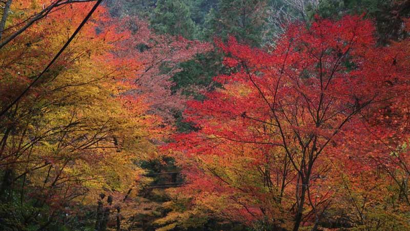 【社員がゆく】10月から12月 中部地方おすすめの紅葉旅